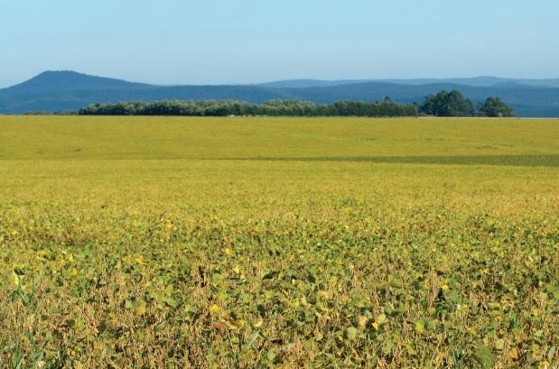 Área de cultivo de soja nos Campos Gerais (PR).